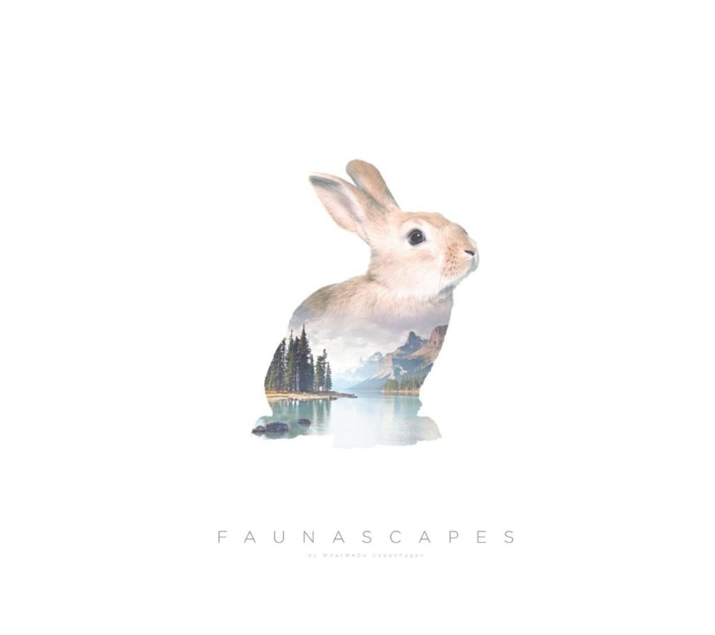 rabbit-1 (1)