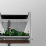 Sistema auto-innaffiante per le piante